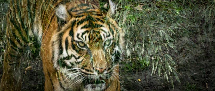 Dschungelbuchprojekt – Infos & Termin 1. Halbjahr 2017